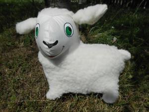 ovce merino